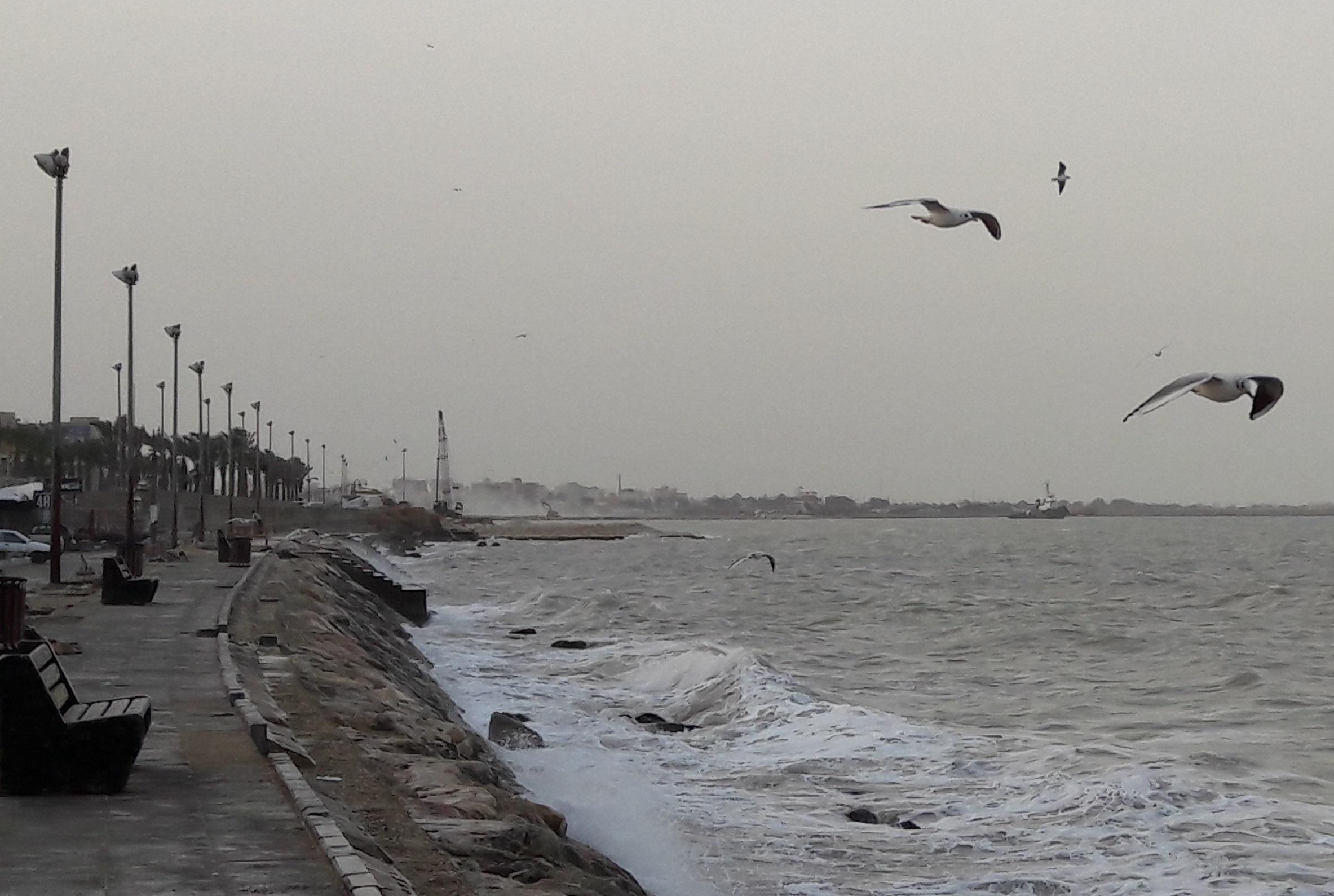 دما کاهش یافت، خلیج فارس مواج شد