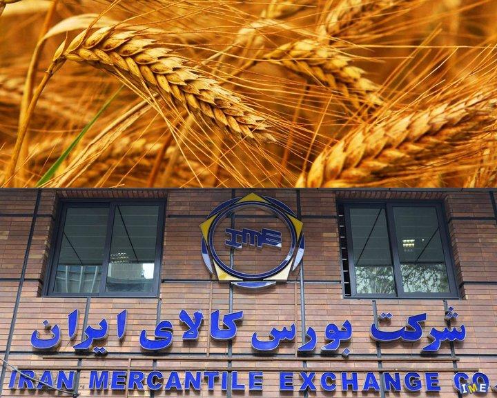 عرضه 261 هزار تن گندم خوراکی 10 استان در بورس کالا