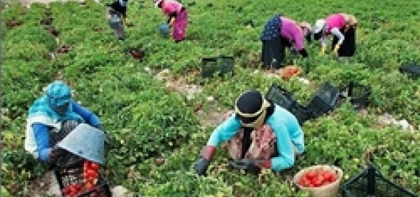 تولید 20 میلیون تن محصولات باغی