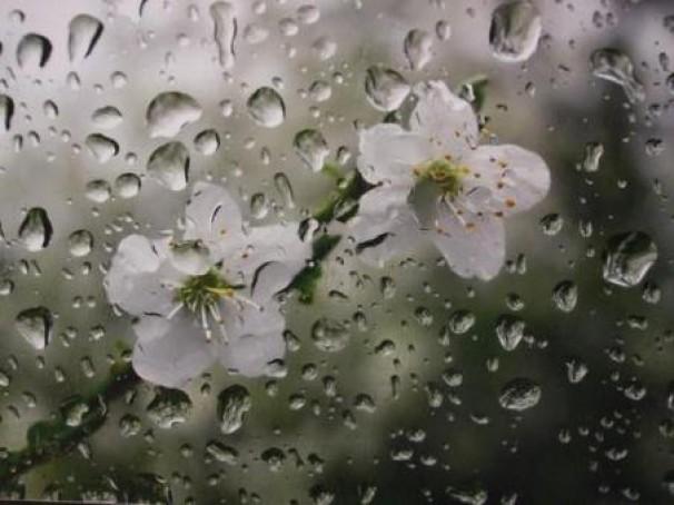 نتیجه تصویری برای بهار باران