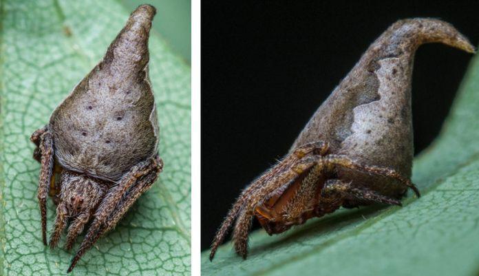 گونه هاي جانوري جديد کشف شده در سال 2017