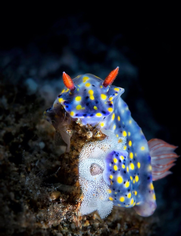 کشف گونه هاي جانوري جديد در اعماق دریاها و جنگل ها
