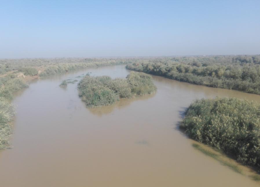 خطر انقراض یک گونه ارزشمند جانوری دیگر در خوزستان