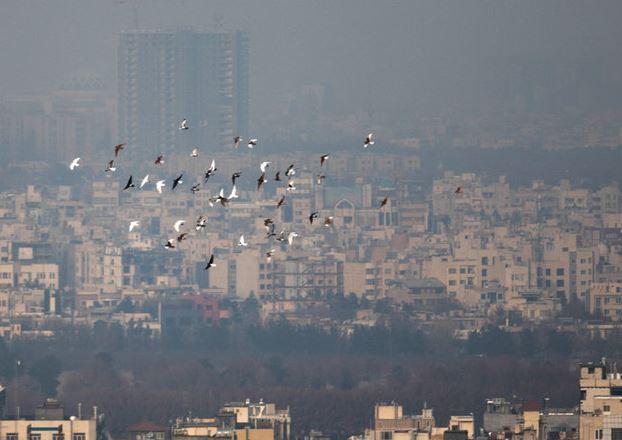 چند منطقه شهر مشهددرگیر مشکل آلودگی هوا