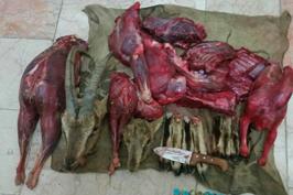 شناسایی متخلف شکار و صید در نایین