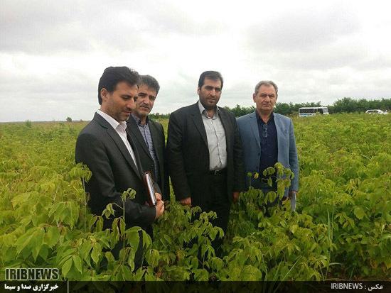 استان اردبیل در مسیر توسعه کاشت انواع گیاهان دارویی