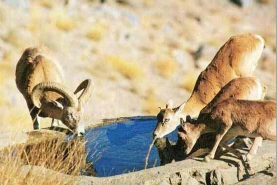 نذر ۱۰ هزار لیتر آب برای حیات وحش تشنه