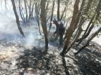 آتش سوزی ۲۲۹ هکتار مرتع و جنگل در استان