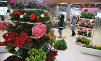 لزوم نظارت اتحادیه و بازارهای گل درباره عرضه گل های قاچاق