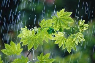 پیش بینی کاهش دما و بارشهای رگباری در خراسان رضوی