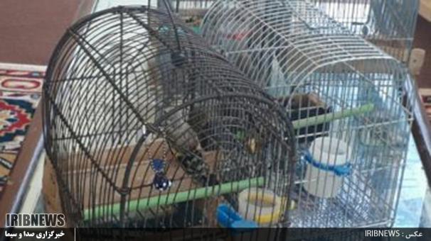دستگیری متخلفین زنده گیری سُهره در پناهگاه حیات وحش سفیدکوه ازنا