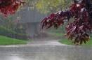 بارش باران در کهگیلویه و بویراحمد
