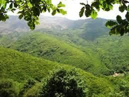 جنگلهای چهارمحال و بختیاری پذیرای میهمانان نوروزی