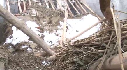 فرو ریختن سقف یک گاوداری در ملکان