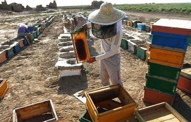 تولید عسل در کازرون