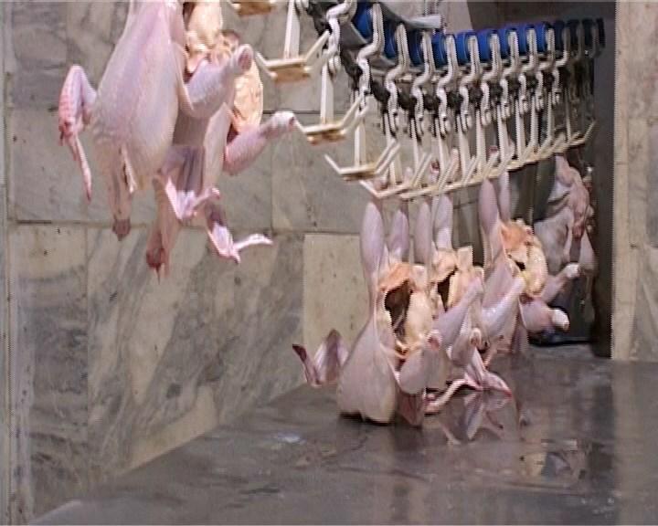 بهره برداری از طرح توسعه کشتارگاه صنعتی مرغ گلپایگان و خوانسار