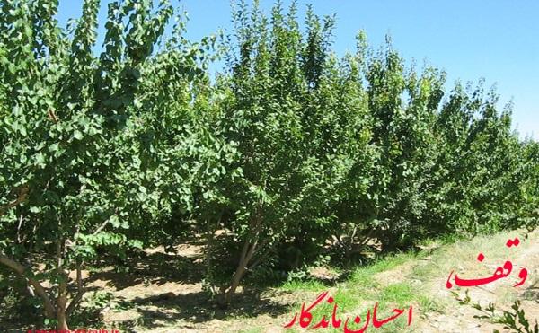 میوه های باغ گوارای نیازمندان
