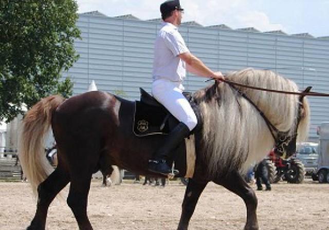 لارستان میزبان جشنواره اسبهای جنوب کشور