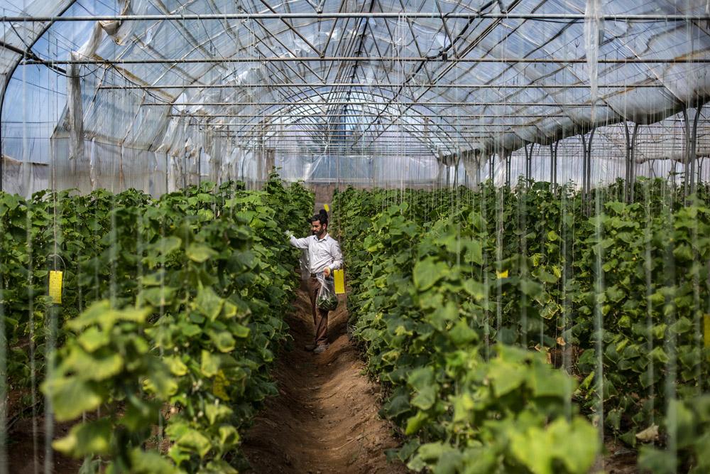 افزایش سطح کشت گلخانهای در فارس