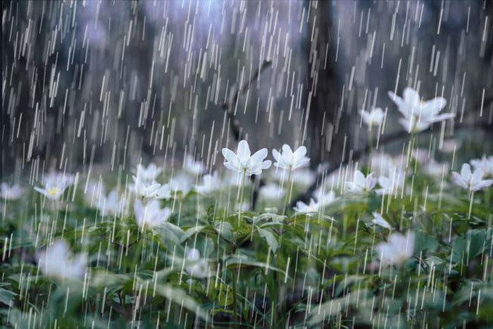پیش بینی بارشهای رگباری در خراسان رضوی