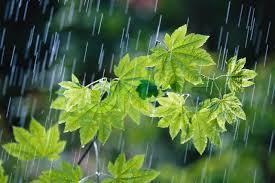 ادامه بارش ها در استان تا دو روز آینده