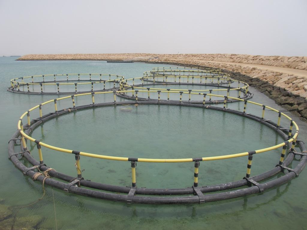 صدور مجوز ۵۰ طرح دریایی و ساحلی در استان بوشهر