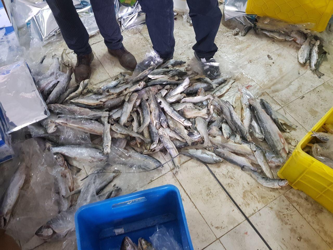 ماهی خبرساز...
