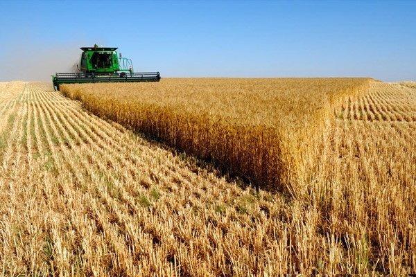 ۴ میلیون و ۸۰۰ هزارتن گندم بصورت تضمینی خریداری شده است