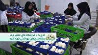 تولید سالانه ده هزار تن قارچ در استان اصفهان