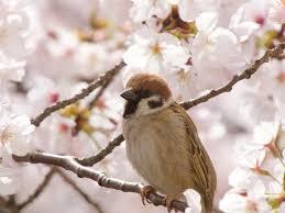 تغییرات اقلیمی عامل کاهش جمعیت پرندگان در آمریکا