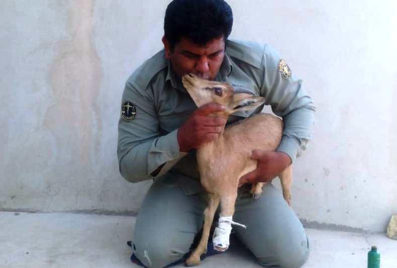 نجات بزغاله وحشی از مرگ حتمی
