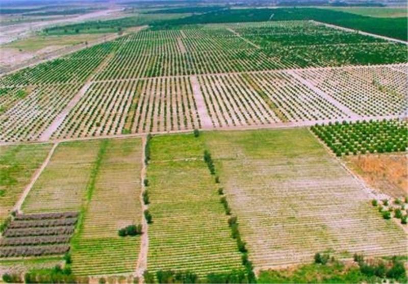 تغییر کاربری غیر مجاز اراضی کشاورزی، کاهش یافته است