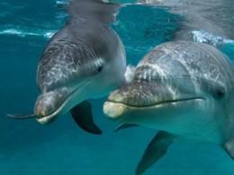 معمای مرگ دلفین ها در تهران