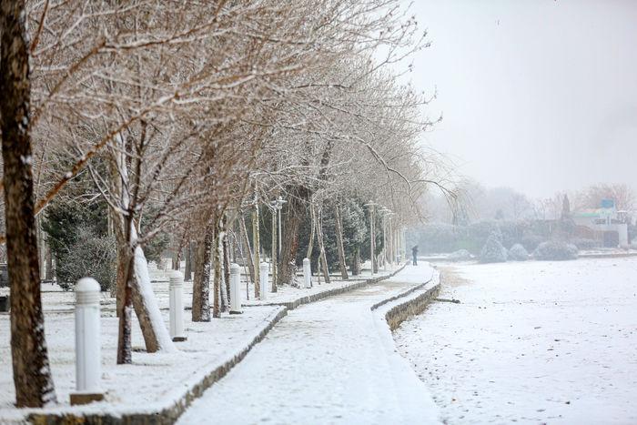 برف از دوشنبه تا چهارشنبه میهمان خراسان شمالی است/ تاکداران استان از هرس درختان خودداری کنند