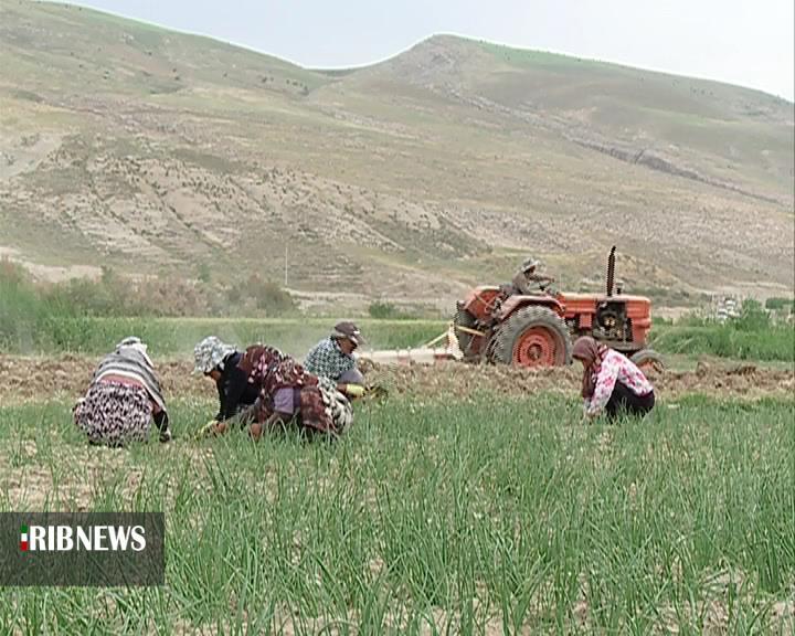 پرداخت بیش از 12 میلیارد ریال غرامت سیل به کشاورزان شیروان