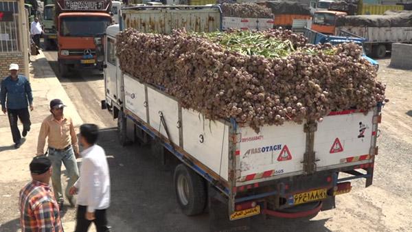 یک دل سیر گلایه از کاهش قیمت سیر