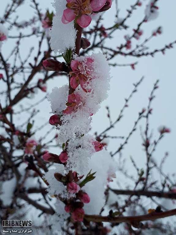 بارش برف بهاری در کنگ