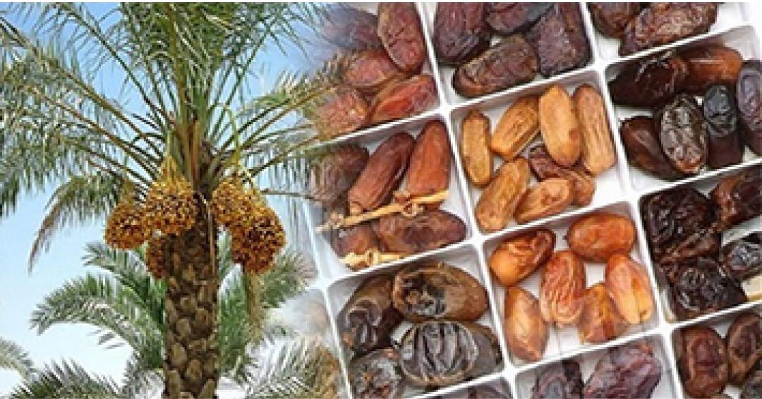 ارزآوری 67 میلیون دلاری صادرات خرما در فارس
