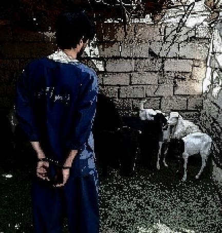 انهدام باند سرقت احشام شرق استان در ریگان