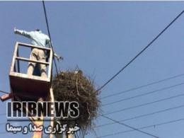 نجات جوجه لک لک با تلاش ماموران برق شهرداری مهاباد