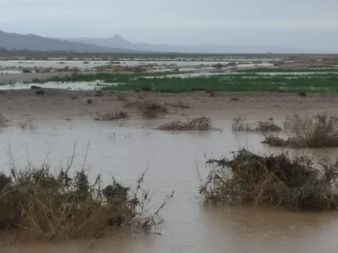 خسارت 2 میلیارد تومانی سیل و تگرگ به بخش کشاورزی جغتای