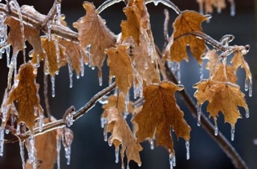 تشدید یخبندان از صبح چهارشنبه