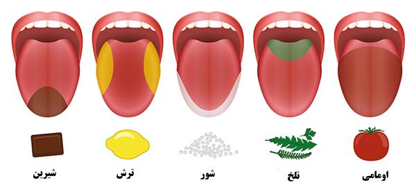 تفاوت طعم و مزه چیست؟