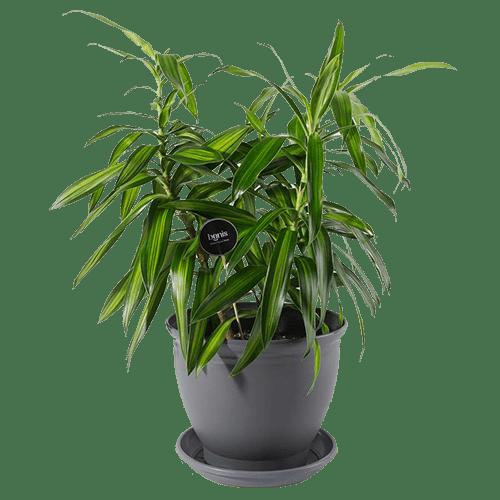 گیاه مناسب اتاق نوزاد و کودک