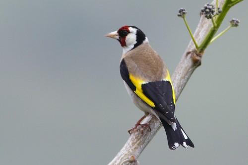 دستگیری متخلفان زنده گیری پرندگان در شهرستان خرمدره