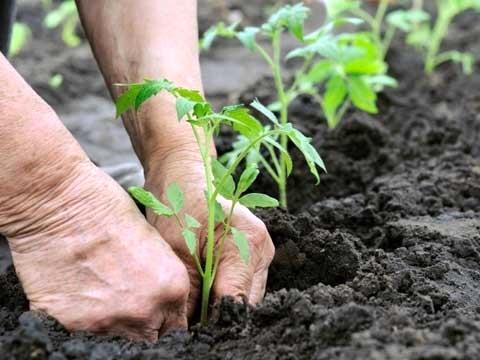 اجرای طرح بذرکاری در عرصه های مرتعی خنج