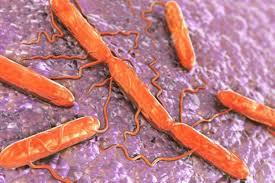 این باکتری در برابر سمیترین فلزات مقاوم است