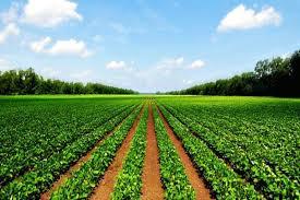 بهره برداری از ۶۶ طرح بخش کشاورزی در دهه مبارک فجر در استان یزد
