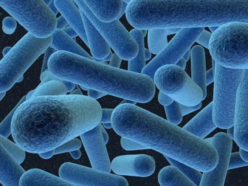 باکتریها هم گذر زمان را متوجه میشوند