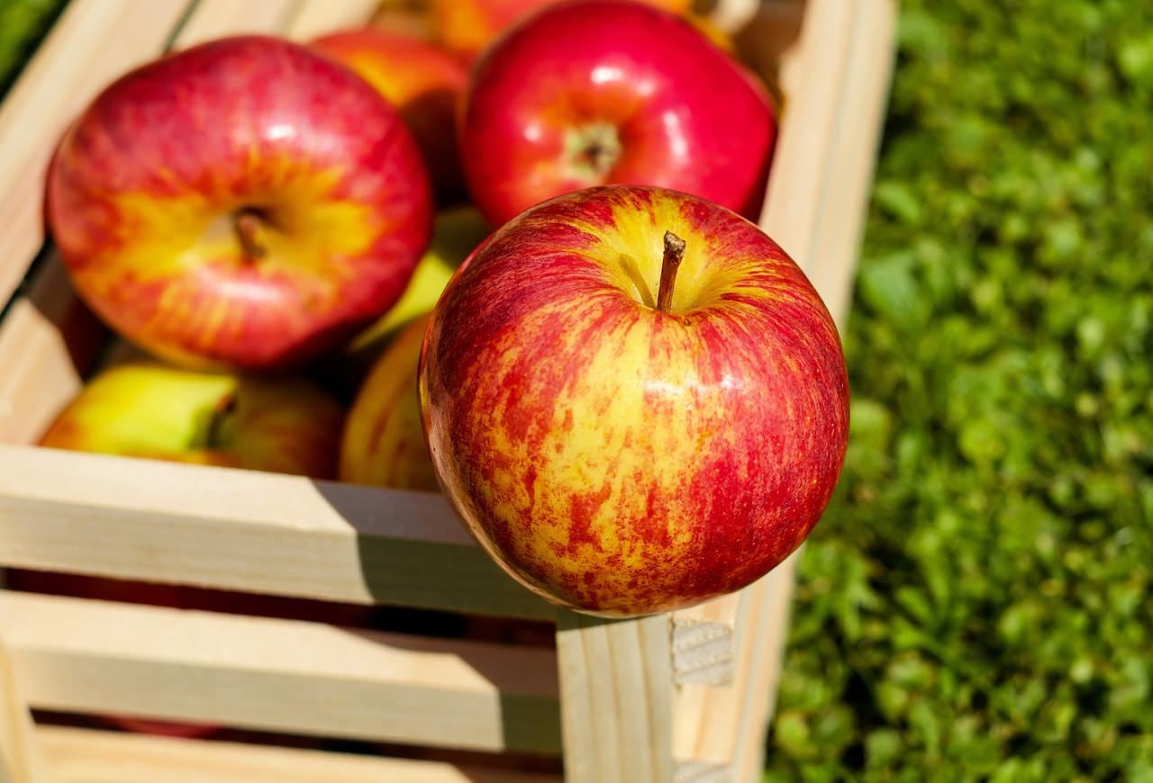 چرا باید هر روز سیب بخوریم؟